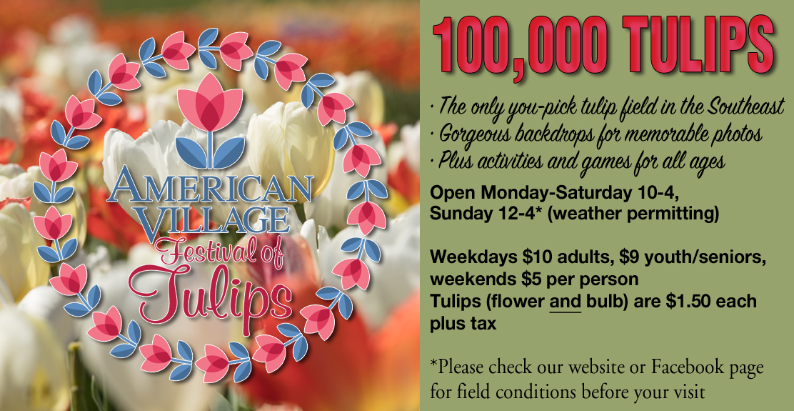 Facebook header_tulips.jpg